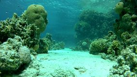 Tropical fish, depth 8 m. the clear water of the red sea. Underwater coral reef red sea. The corals and fish. Transparent and warm water. Underwater life stock footage