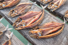 Tropical fish drying in the sun Stock Photography