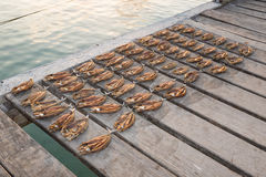 Tropical fish drying on a wooden jetty Royalty Free Stock Image