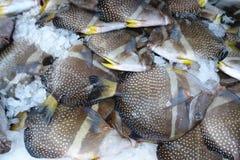 Tropical fish food Royalty Free Stock Photo