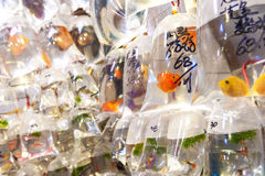 Tropical fish hanging in plastic bags at the Tung Choi Street go royalty free stock photo