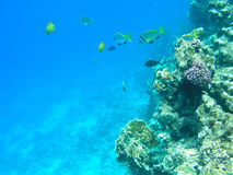 Tropical fish and hard corals in the Red Sea, Egypt. Vacation Stock Photo