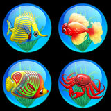 Tropical Fish Icone. Some Tropical and Colored Fishes on Icones Royalty Free Stock Photography