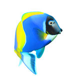 Tropical fish isolated Stock Photography