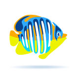 Tropical fish isolated on white Stock Photography