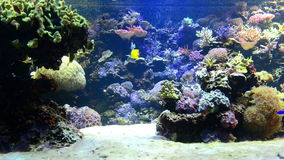 Tropical fish near coral reef. With blue ocean water stock video footage