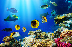 Tropical fish over coral reef. Colorful tropical fish swimming over coral reef with blue sea background