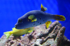 Tropical fish over coral reef Stock Images