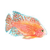 Watercolor hand drawn tropical fish on a white background. Tropical fish painted with watercolor. Illustration of marine inhabitants on a white background Royalty Free Stock Photography