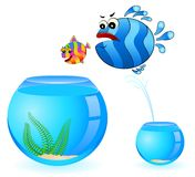 Tropical fish pursues after  fish Stock Images