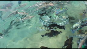 Tropical fish in the Red Sea.  stock video