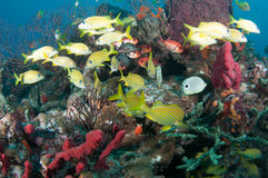 Tropical fish on a reef Stock Photography