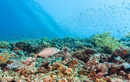 Tropical fish on a reef. Tropical fish on a coral reef stock photo
