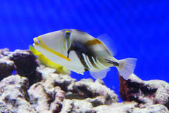 Tropical fish and reef Stock Photos