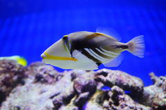 Tropical fish and reef Stock Images