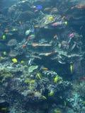 Tropical Fish Scene Background Stock Photos