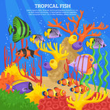 Tropical Fish Sea Background Stock Image