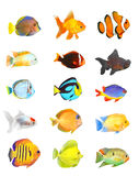 Tropical fish set. Royalty Free Stock Image