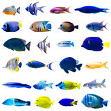 Tropical Fish Set Royalty Free Stock Photography