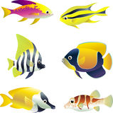 Tropical Fish Set Stock Photography