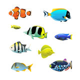 Tropical fish set. In vector on white background Royalty Free Stock Photos