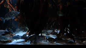 Tropical fish swimming in a tank. At the aquarium stock video footage