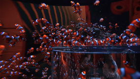 Tropical fish swimming in a tank. At the aquarium stock footage