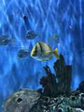 tropical Fish Swimming in Tank St Pete Beach Florida Royalty Free Stock Images