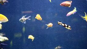 Tropical fish swimming underwater Royalty Free Stock Photos