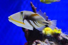 Tropical fish. Taken in florida Stock Photos