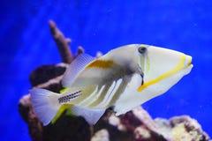 Tropical fish. Taken in florida Royalty Free Stock Image