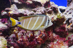 Tropical fish. Taken in florida Royalty Free Stock Photo