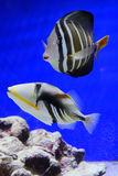 Tropical fish. Taken in florida Stock Photography