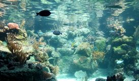 Tropical Fish Tank. Aquarium with a variety of tropical fish and coral Stock Images