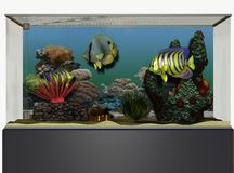 Tropical fish tank Royalty Free Stock Images