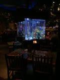 Tropical Fish Tank, Rain Forest Cafe`, Disney Springs, Orlando, Florida Stock Photos