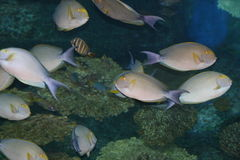 Tropical fish, Thailand. Tropical fish, Siam ocean world, Thailand Royalty Free Stock Photos