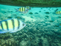 Tropical fish under a boat Royalty Free Stock Photos