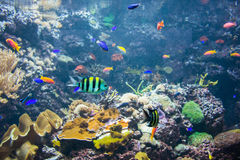 Tropical fish. Under the water Stock Image