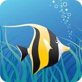 Tropical fish under water. Moorish idol fish on the blue underwater background with algae Stock Photography