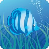 Tropical fish under water. Blue striped tropical fish on the blue underwater background with seaweed Royalty Free Stock Photography