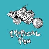 Tropical Fish - Vector hand drawing illustration Stock Image
