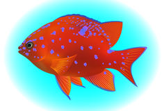 Tropical fish, vector illustration Royalty Free Stock Photos
