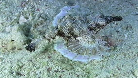 Tropical Fish on Vibrant Coral Reef. Tropical Fish on Coral Reef, closeup, Red sea stock video