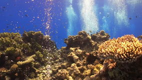 Tropical Fish on Vibrant Coral Reef. Red sea stock footage