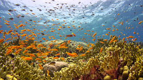 Tropical Fish on Vibrant Coral Reef Stock Photo