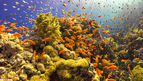 Tropical Fish on Vibrant Coral Reef Stock Photos