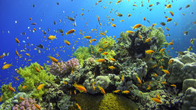 Tropical Fish on Vibrant Coral Reef Stock Image