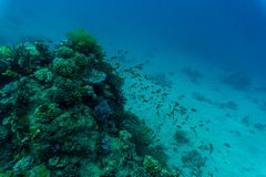 Tropical Fish on Vibrant Coral Reef, underwater scene Stock Photography