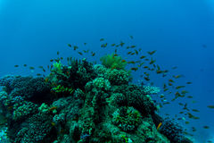 Tropical Fish on Vibrant Coral Reef, underwater scene stock photos
